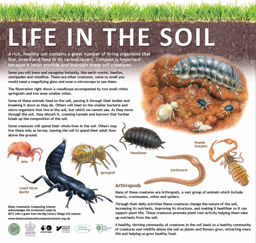 Life in the soil infographic